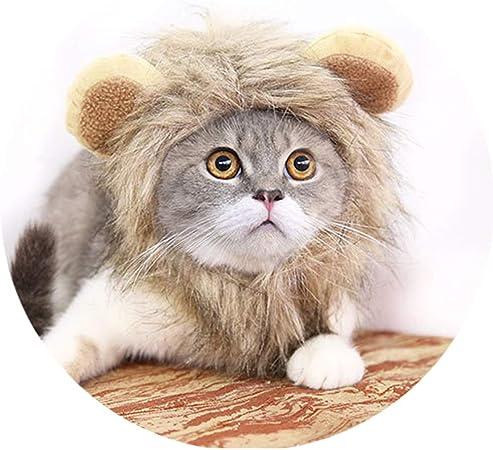 Peluca Disfraz De LeóN, Sombrero Pelo Diverdido Cosplay Traje para Perro Gato Cachorro Mascotas,Ropa para Mascotas,Disfraz De Halloween para Perro Gato,M: Amazon.es: Hogar
