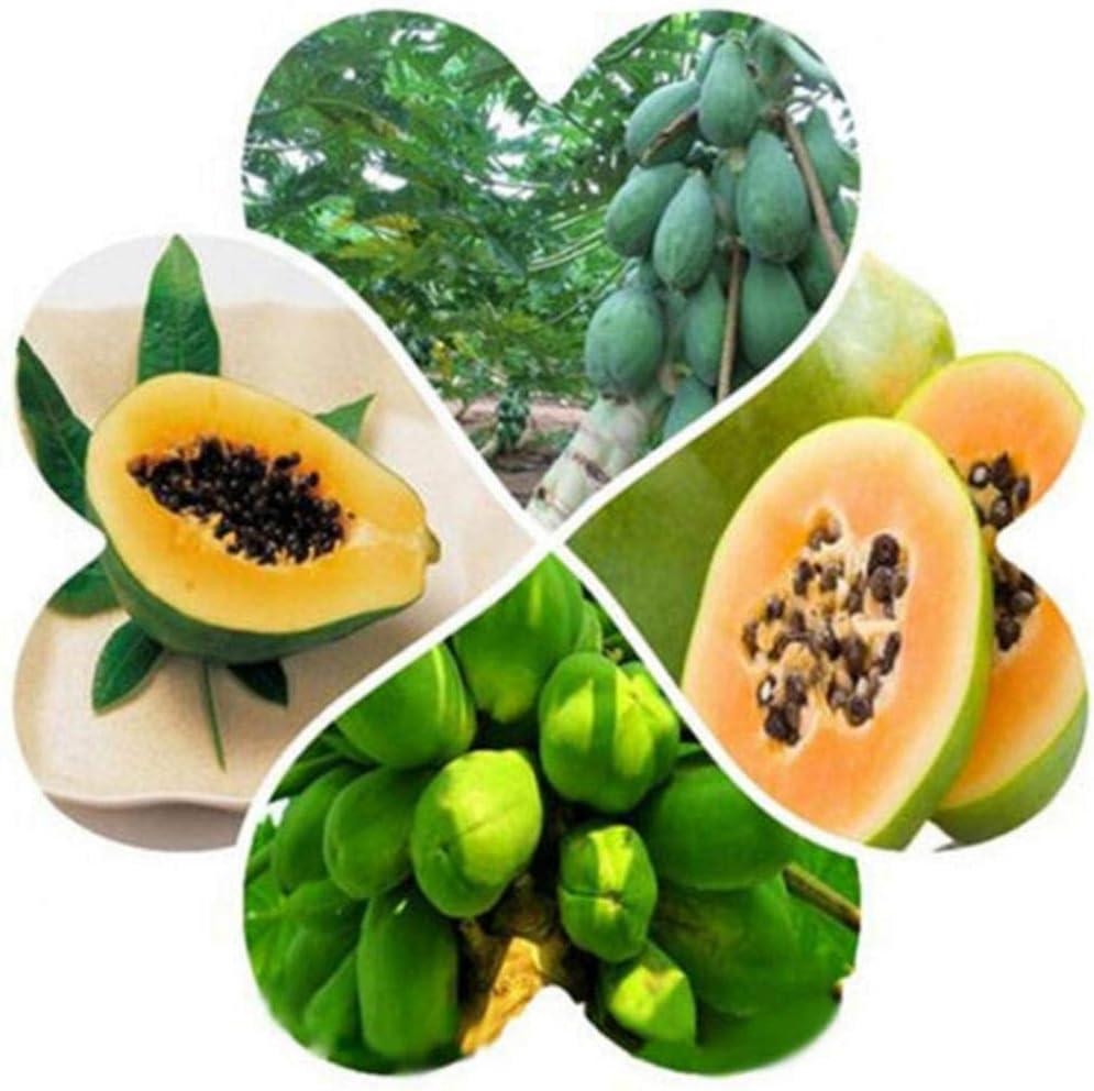 Uticon 40pcs Enanos Semillas De Papaya Fruta Dulce Org¨¢Nico Planta Yarda Del Jard¨ªN De Bonsai Decor - 40pcs Papaya Semillas #