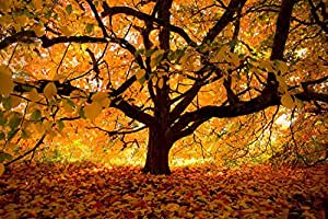 Sim,20.6 X 15.1 inch Handmade Premium Basswood Jigsaw Puzzle 300 Piece Special Present Home Decor in Box Present-Wrap With Glue Powder : Autumn Colours Under The Tree