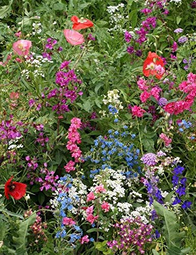 Part Shade Wildflower Mix Annual/Perennial Butterfly Attracting Blend ST05 (6500 Seeds, or 1/4 oz)