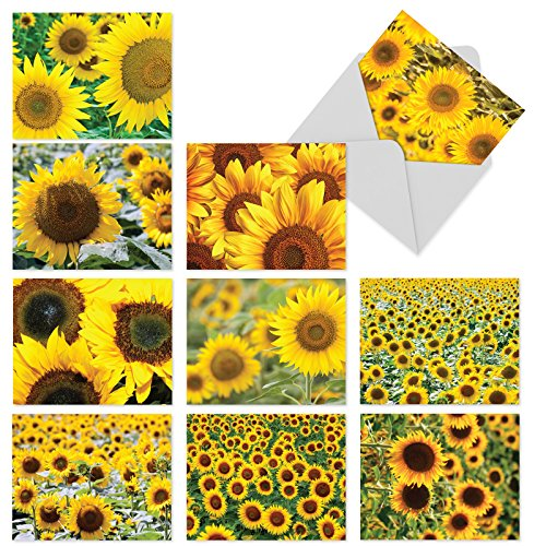 Beautiful Sunflower Blank Note Cards 10 Pack - 4 x 5.12 inch All Occasion 'sunny Side Up' Flower Greeting Cards - Boxed, Bulk Set of Assorted Writing Notecards - Floral Art w/ Envelopes - M6042sl