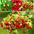 "KOUYE GardenSeeds- Garden Red Raspberries 50pcs Raspberry Plants""Endless Harvest"" Hardy Full of Nutrition Plants Fruits Wild Strawberry Seeds"
