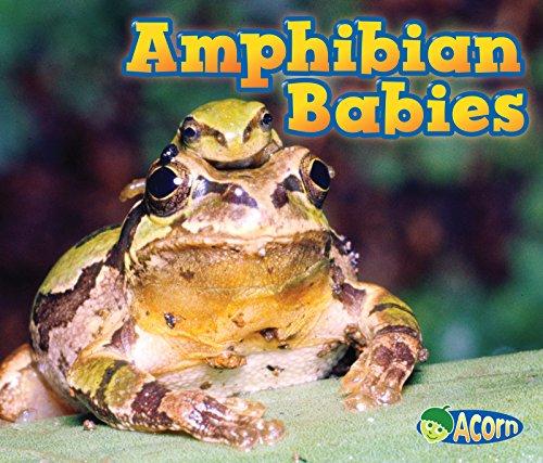 Aquatic Amphibians (Amphibian Babies (Animal Babies))