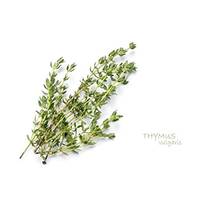 Sow No GMO Thyme Non GMO Heirloom Aromatic Culinary Garden Herb 1000 Seeds : Garden & Outdoor