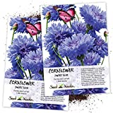 Seed Needs, Dwarf Blue Cornflower (Centaurea cyanus) Twin Pack of 1,500 Seeds Each