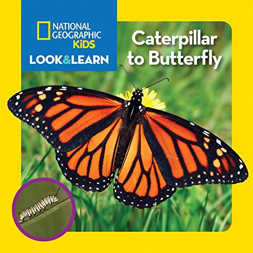 National Geographic Kids Look and Learn: Caterpillar to Butterfly (Look & Learn)
