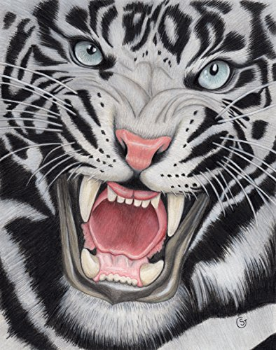 Tiger White Angry Sumatran Snarling Wild Cat Jungle 8.5''x11'' Colored Pencil Drawing Painting Sherry Goeben Art by Sherry Goeben Art