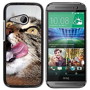 PC/Aluminum Funda Carcasa protectora para HTC ONE MINI 2 / M8 MINI American English Shorthair Wirehair Cat / JUSTGO PHONE PROTECTOR