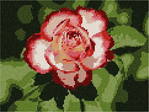 (pepita Shoshana Rose Needlepoint Canvas)