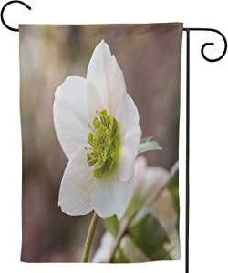 C COABALLA Lenten Rose Sepal,Welcome Garden Flag Garden Yard Banner Lawn Outdoor Decoration Single Flower 12.5''x18''