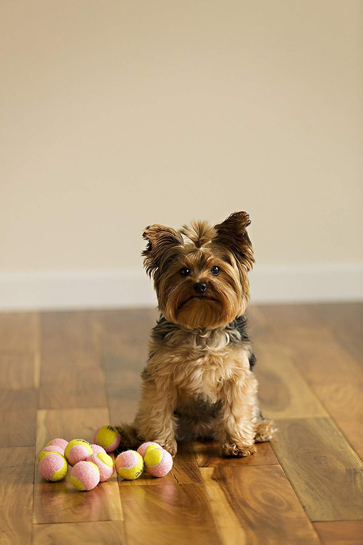 Midlee X-Small Dog Tennis Balls 1 5