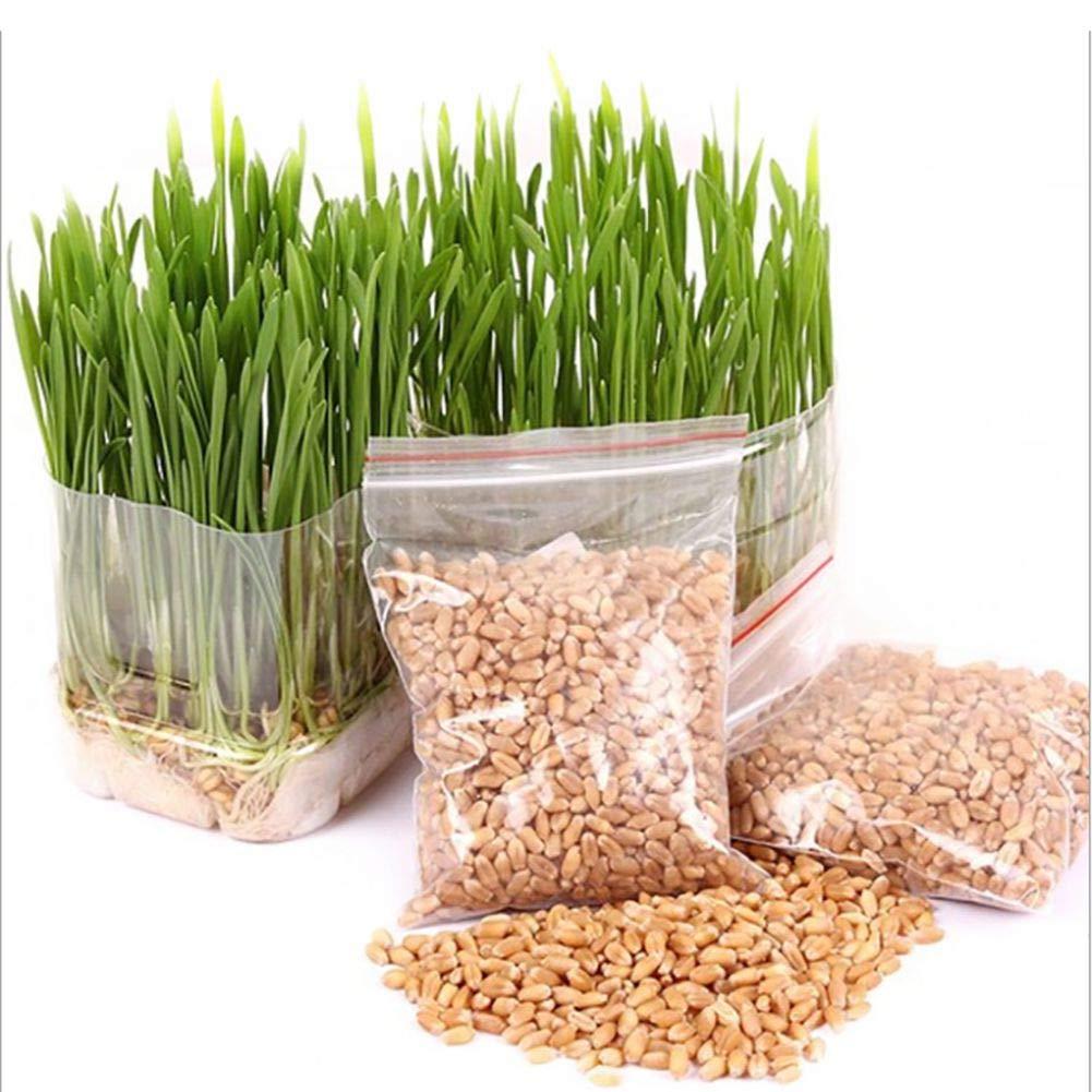 Qianren Graines de Chat 2ps Mini kit d'herbe pour Animaux de Compagnie Bio 30g -Grow Wheatgrass pour Animaux de Compagnie