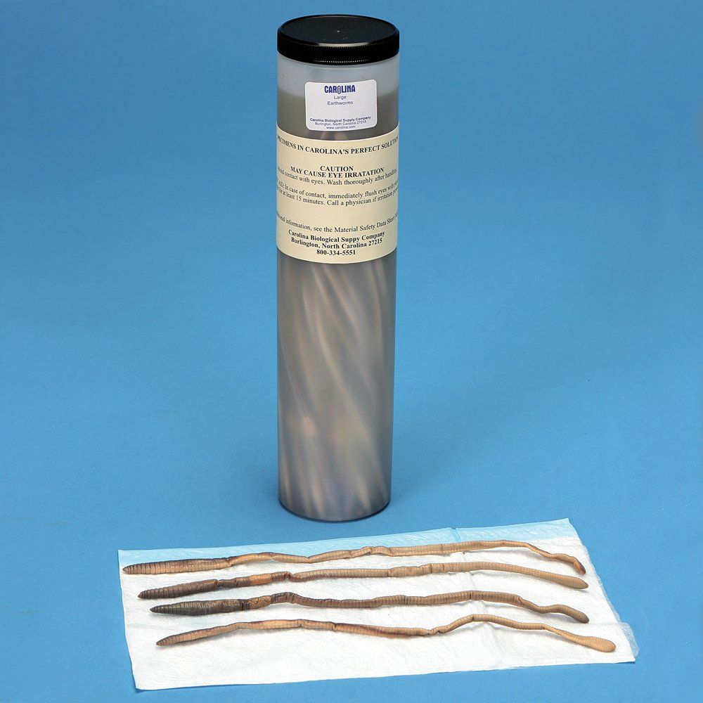 Tube of 50 Perfect Solution Preserved Earthworms