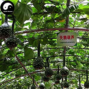 Buy Calabash Gourd Seeds 40pcs Plant Melon Vegetable Swan Bottle Gourd