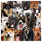 Best Creative Converting Friends Plates - Creative Converting 24 Count Best in Show Woof Review