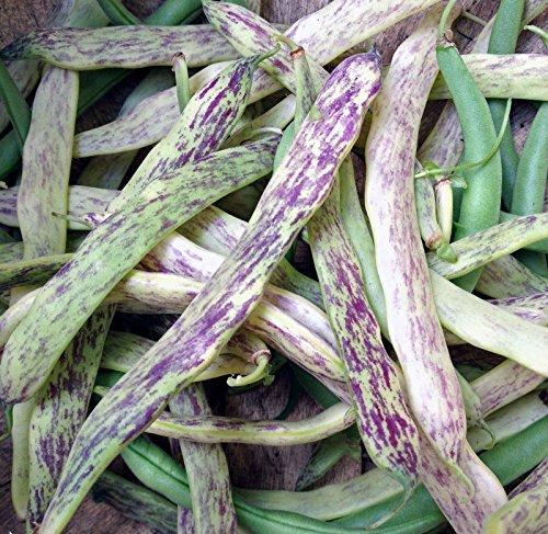 1/4 LB, Dragon Tongue Beans - , snap bean, green shell, dried bean)