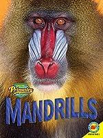Mandrills (Amazing