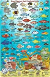 Grand Cayman Island Dive Map & Reef Creatures Guide Waterproof Fish Card