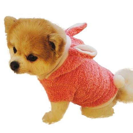 Amazon.com: Caliente venta lindo perro Escudo, jushye Cat ...
