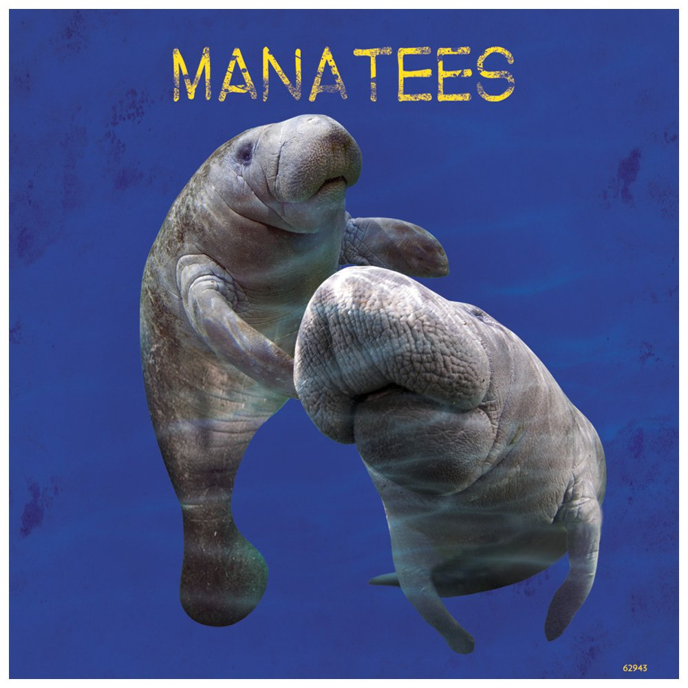 Manatees Themed Wildlife Art Tree-Free Greetings Premium Refrigerator Magnet 62943 3.5 x 3.5 Inches
