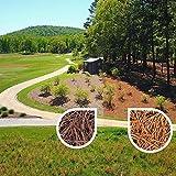 Nature Shades 2.5 Gallon Pine Straw Colorant