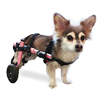 Popular stores for handicappedpets.com