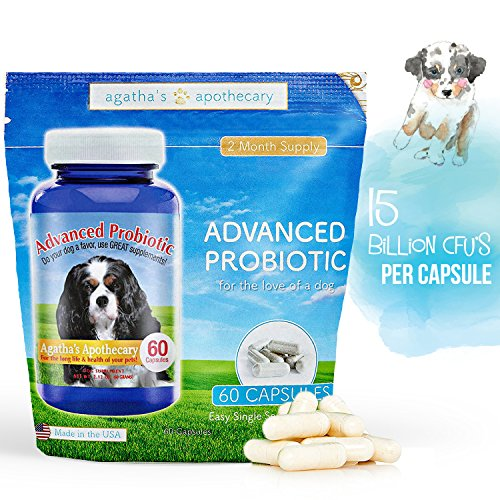 Advanced Probiotic 2 Month Supply   15 Billion Cfu 10 Strains For Dog Health Voted Best Dog Probiotic 2017 Helps Digestion  Ibs  Allergies  Dental Issues  Yeast    Diarrhea