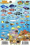 "Honduras Bay Islands Reef Creatures Guide Franko Maps Laminated Fish Card 4"" x 6"""