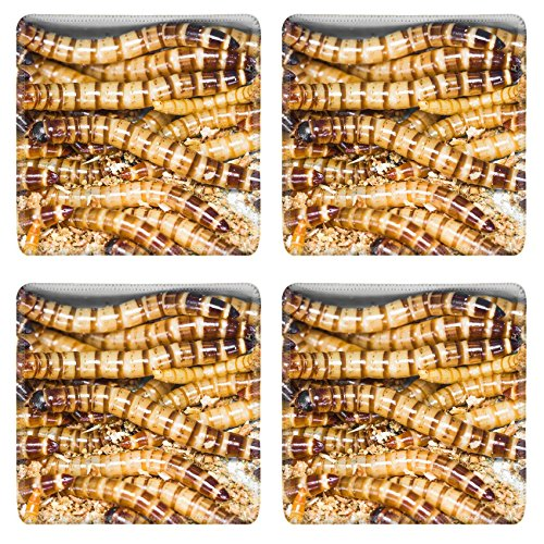 liili-square-coasters-image-id-22133052-meal-worms-is-the-common-name-for-larvae-of-beetle-tenebrio-