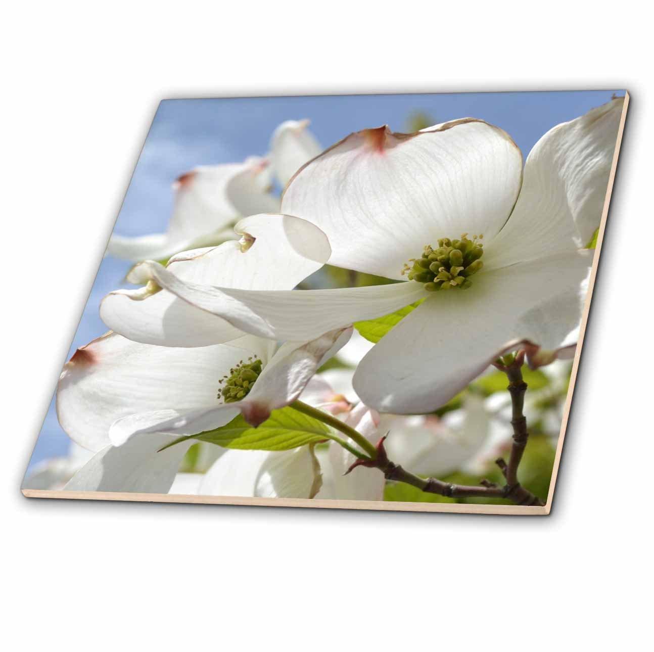 6-Inch 3dRose ct/_22959/_2 Dogwood Flowers III Ceramic Tile
