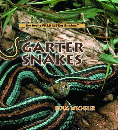Garter Snakes  The Really Wild Life Of Snakes