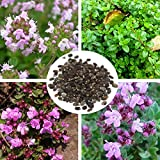 100pcs Garden Lawn Creeping Thyme Seeds Perennial Flower