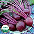 David's Garden Seeds Beet Detroit Dark Red EB120C (Red) 200 Organic Heirloom Seeds