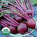 David's Garden Seeds Beet Detroit Dark Red EB120C (Red) 200 Organic Heirloom Seeds