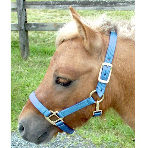 Intrepid International Nylon Miniature Horse Halter, Light Blue, Mini