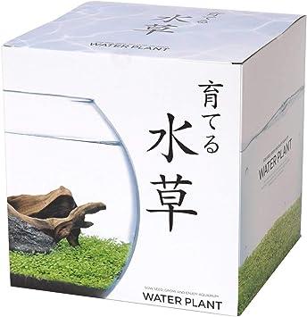 水草 育てる