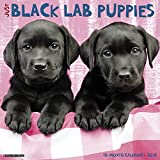 Just Black Lab Puppies 2018 Wall Calendar (Dog Breed Calendar)