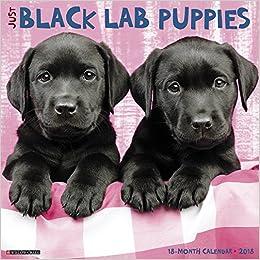 Just Black Lab Puppies 2018 Calendar Willow Creek Press