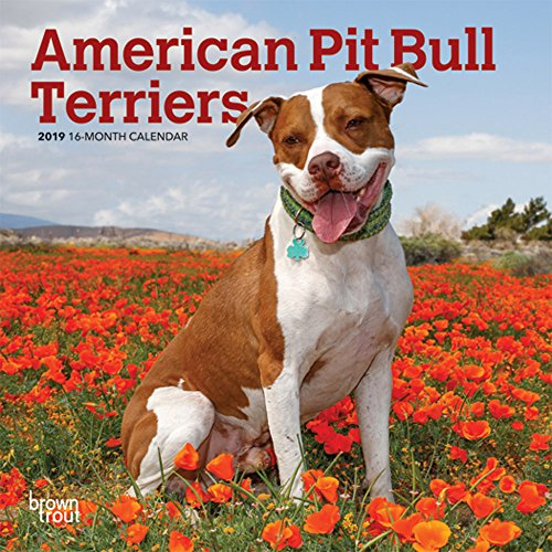 American Pit Bull Terriers 2019 7 x 7 Inch Monthly Mini Wall Calendar, Animals Dog Breeds (Multilingual Edition)