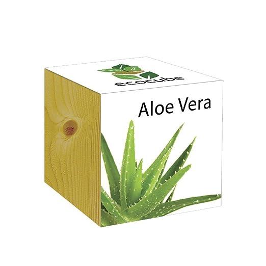 13 opinioni per Extragifts ecocube Aloe Vera- piante nel cubo di legno
