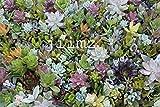 28 Varieties Succulent Cuttings Great for Vertical Gardens & Wreaths & Topiaries