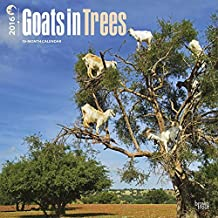 Goats in Trees 2016 Wall Calendar by 2016 Calendars