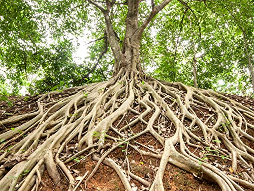 Roots and Symbiosis with - What Stores Water