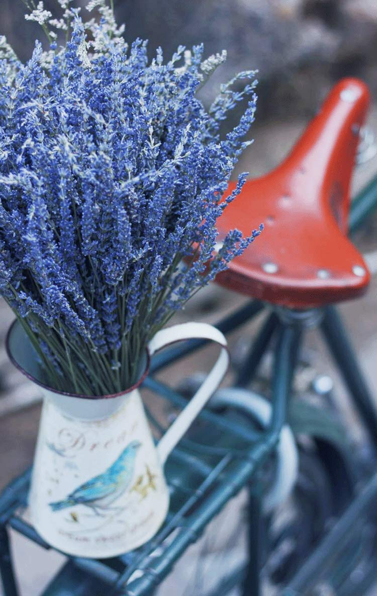 Decorative Flowers Bouquet for Home Decor TooGet Natural Lavender Bundles Wedding or Any Occasion Freshly Harvested 100 Stems Dried Lavender Bunch 16-18 Long Gift Crafts Freshly Harvested 100 Stems Dried Lavender Bunch 16-18 Long