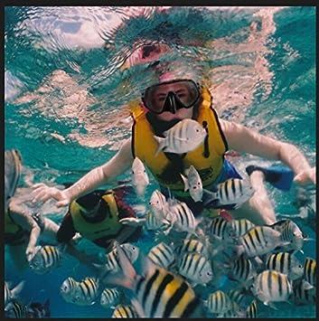 Máscara de Buceo con Tubo, ARAER Snorkel Máscara Gafas de Buceo de Silicona con Visión de 180° Lentes Vidrio Templado Antiniebla Cristal Resistente Rotura ...