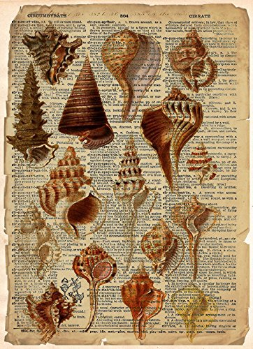 Vintage Shell - Vintage Sea shell illustration science art, cool beach art