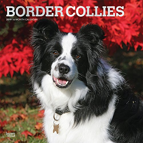 Border Collies 2019 12 x 12 Inch Monthly Square Wall Calendar with Foil Stamped Cover, Animals Dog Breeds Collies (English, French and Spanish Edition) by