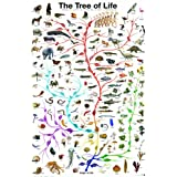 Evolution-The Tree of Life 24 x 36 Inch Full Color Science Information Poster