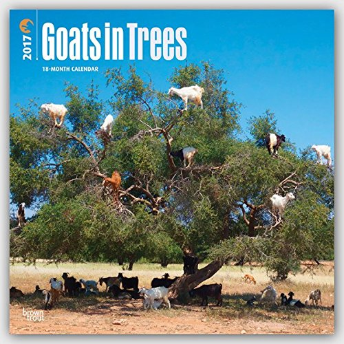 Goats in Trees 2017 Square by Poster Revolution