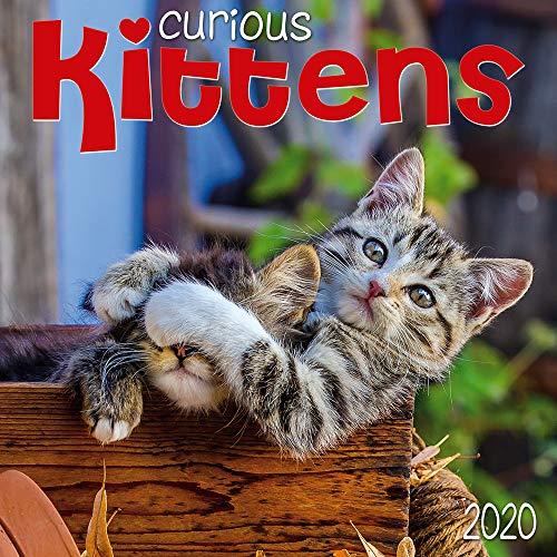 Curious Kittens 2020 Wall Calendar